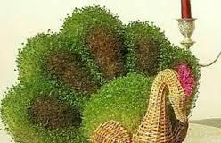 کاشت سبزه دورنگ عید نوروز