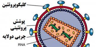 شناسایی انواع ویروس ها