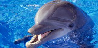 دانستنی های جالب درباره دلفین ها