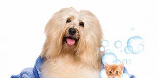 آموزش حمام کردن چند حیوان خانگی
