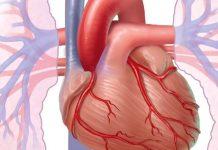 درمان بیماری ضعف قلب با داروی گیاهی