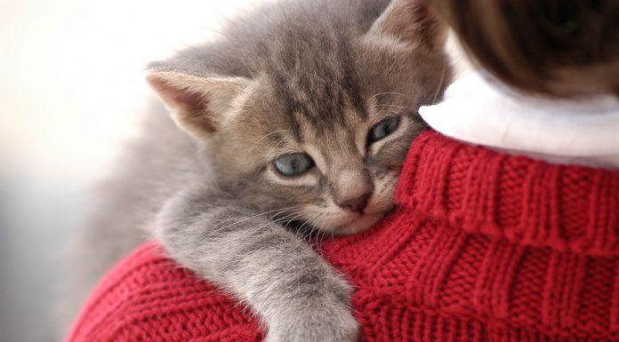 روانشناسی گربه ها